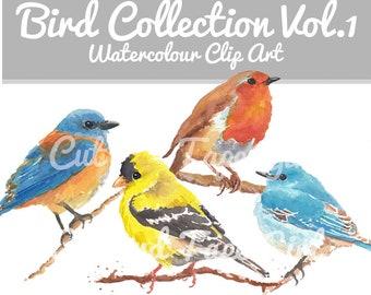 Bird Clip Art - Original Watercolor Clipart, Instant Download, Hand Drawn, Goldfinch, English Robin, Craft Supply