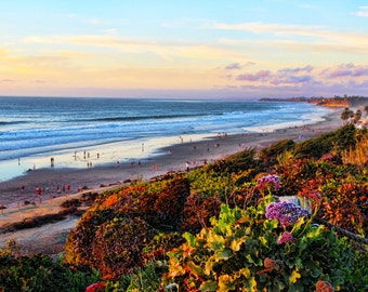 Del Mar Beach Coast, Coastline, Sunset, Flowers, San Diego, California