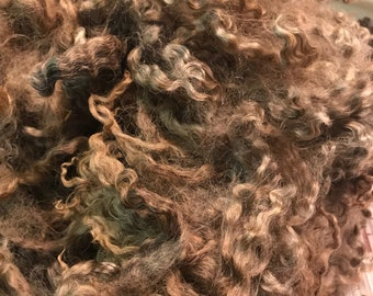 Colored Cotswold Lamb Fleece - 3 lbs 3 oz