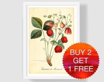 Strawberry Illustration, Strawberry Art Print, Botanical Print, Botanical Wall Art, Fragaria, Strawberry Wall Decor, Strawberry Kitchen Art