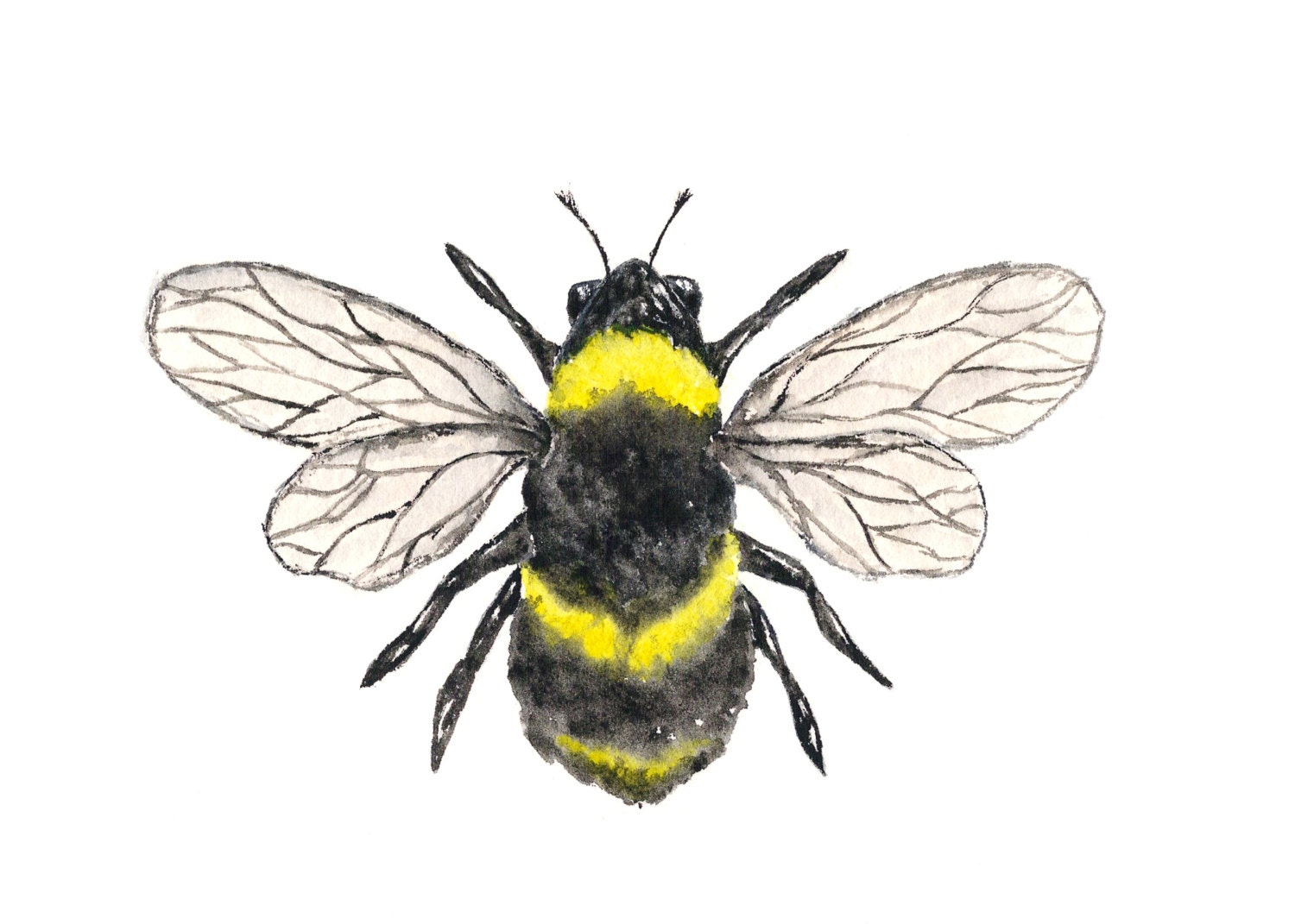 Watercolor Painting Bumble Bee