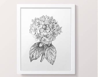 Flower drawing, Pencil sketch, Black and White print, Original Hydrangea graphite sketch, Botanical Flower, Cottage Chic, Boho, wall art