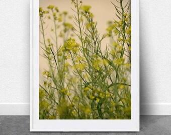 Meadows, DIGITAL Download, Wall Art, Yellow Flower Art, Photography, Nature Art, Printable Art, Botanical Art, Fine Art, Floral Photo Art,
