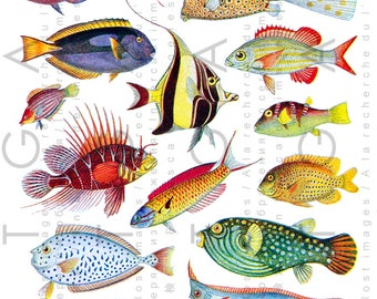 VINTAGE TROPICAL FISHES Dazzling Colors. Fabulous Exotic Fishes Collage Sheet. Ocean Fish Digital Download.