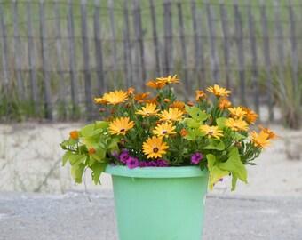 Beach Pail Flowerpot at Scusset Beach