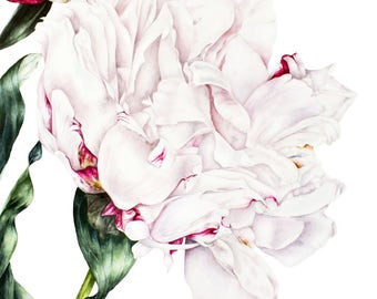 Botanical Art Print, White Peony Print, Watercolour Print, Peony print, Home Decor, Wall Art, Wall Decor, Flower Painting, Gift For Her