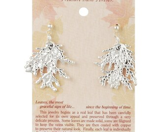 Real Cypress Leaves Dipped In Silver - Post Dangel Earrings - Silver Electroplated - Carded