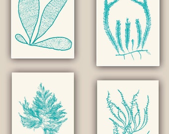 Seaweed Art Print, Sea weed botanicals, green turquoise, Victorian Botany, beach cottage decor, Coastal living, Nautical art, 8x10 Set of 4