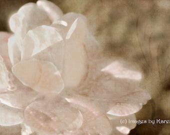 Digital Art - Fine Art Photography - White Rose