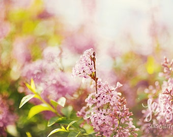 Flower Photography, Pink, Botanical Art Print, Shabby Chic Nature Photography, Romantic Home Decor - Lilac Flower