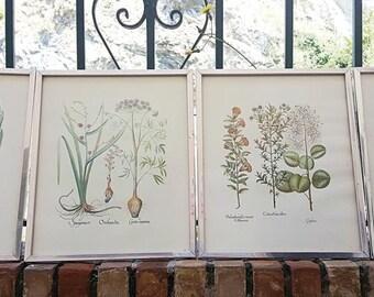 Vintage Botanical Frames Set