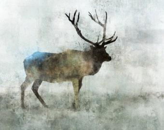 Reindeer 01: Giclee Fine Art Print 13X19