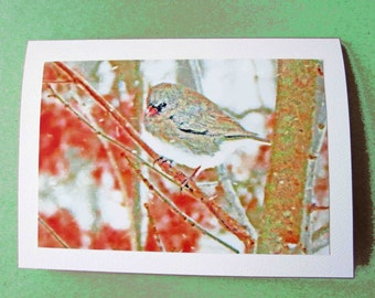 Winter Card Set - 5 Cards of Your Choice
