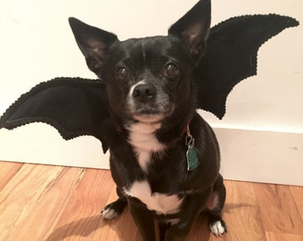 Bat Wings Dog's Bat Costume-- Adorable for Halloween! toy breeds, cats, small breeds, medium and large breeds, giant breeds. Handmade, Felt