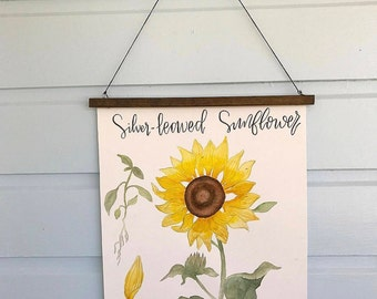Silver-Leaved Sunflower