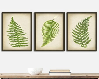 BOTANICAL Print SET of 3 Art Posters, Fern Print Set, Botanical Room Decor, Ferns Wall Decor, Green Plants Art, Forest,  8 x 10 Fern Print