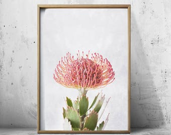 Pin Cushion Flower Art Protea Print Protea Art Flower Art