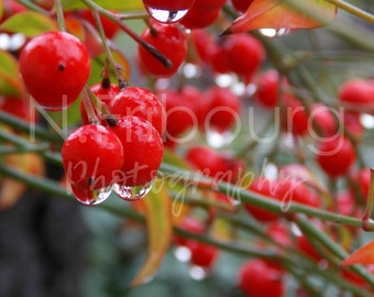 Berry Drops