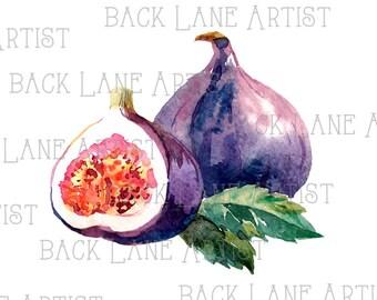 Fruits Fig Watercolor Drawing Clipart Lineart Illustration Instant Download PNG JPG Digi Line Art Image Drawing Lb62
