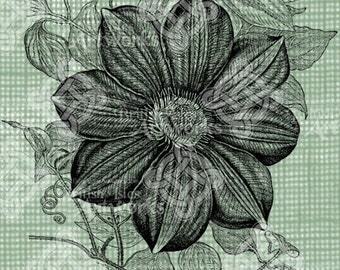 Digital Download Clematis Flower Floral Botanical image, Antique Illustration, digi stamp, digis, digital stamp, Elegant, and beautiful