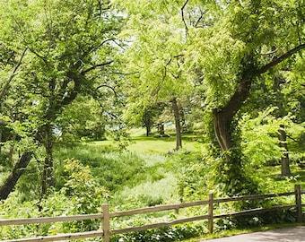 Green Grove Nature Print