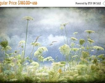 20 Percent Off Sale nature fine art photograph queen annes lace blue green gallery wrap home decor office decor