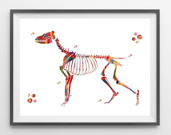 Dog skeletal system watercolor print dog anatomy veterinary art canine skeleton structure print dog skeleton and bones illustration