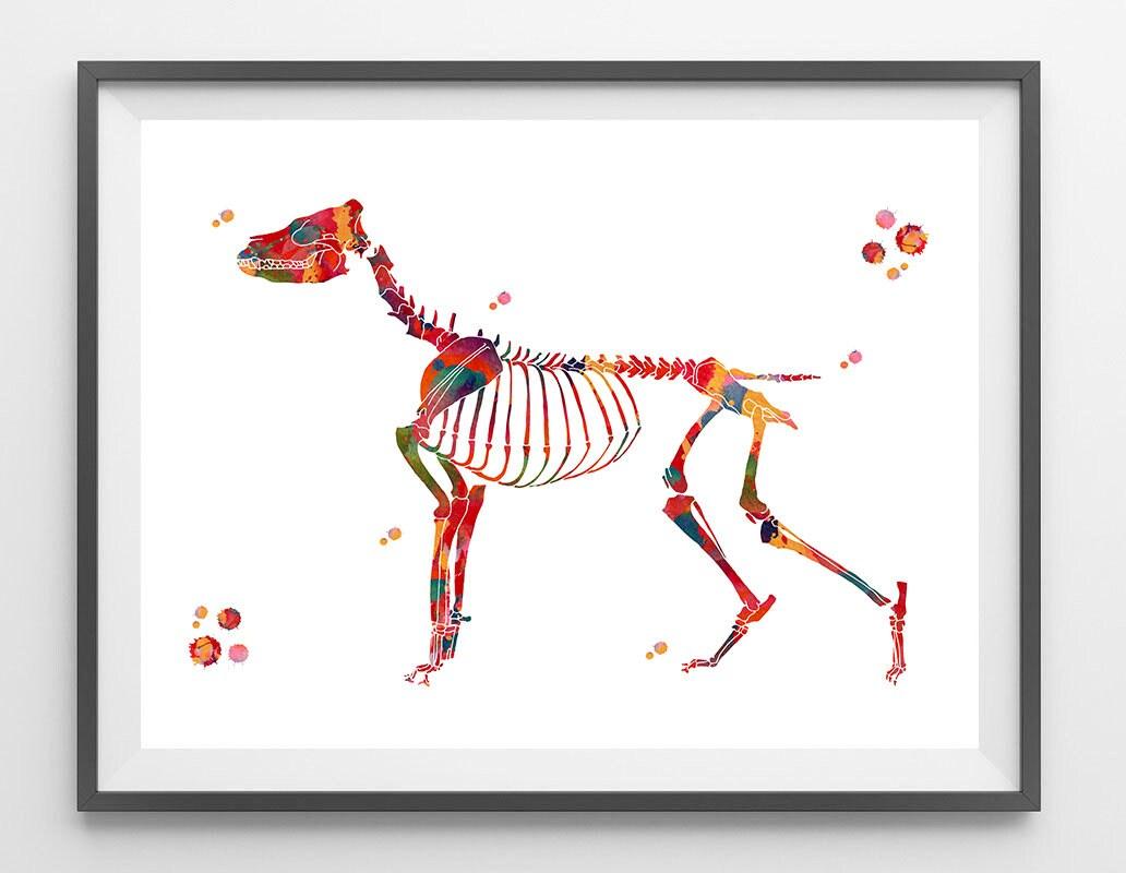 Atemberaubend Hund Anatomie Männlich Bilder - Anatomie Ideen ...