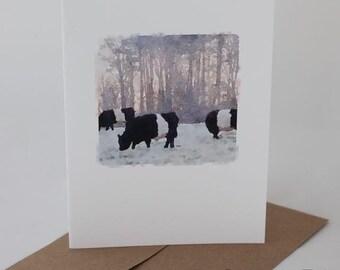 BELTIE COWS GRAZING, Oreo cows watercolor, cow photo card, Fearrington Village, blank greeting card, Beltie card