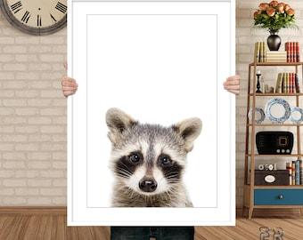 Raccoon Print, Raccoon Wall Art, Nursery Animal Print, Nursery Decor, Baby Animal, Raccoon Poster, Kids Room Decor, Raccoon, Raccoon Photo