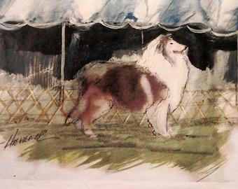 Collie Dog Print
