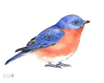 Bluebird Watercolor Painting - bird print of watercolor painting A4 print wall art print - bird art print BB2013, blue bird print