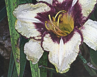 The Flora Collection: Purple Throated Iris by SusanARay of OneHealingStone Studio