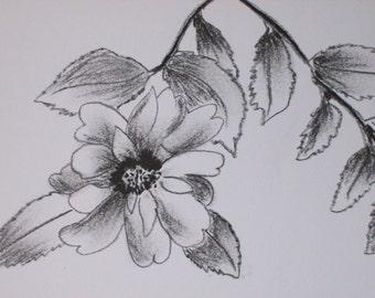 Original charcoal drawing. Sasanqua camellia drawing.Charcoal cameilia drawing. Original art work.