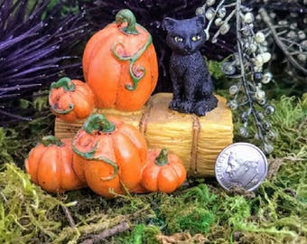 Miniature Black Cat on a Hay Bale with Pumpkins