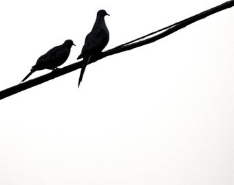 Two Birds on Walbridge Black and White Nature Photography 2016