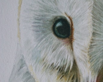 Barn owl wildlife study painted in watercolour very high detail.