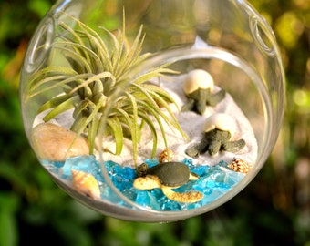 Sea Turtle Terrarium Kit ~ Small Air Plant Terrarium Kit ~ 2 Hatching Sea Turtles ~ 1 Sea Turtle ~ Coastal Living Beach House Decor ~ Gift