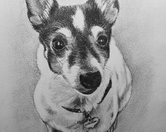 Custom graphite pencil pet portrait 8x10