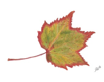 "Autumn Art Print -Red Maple Leaf Giclee Print - 5"" x 7"""