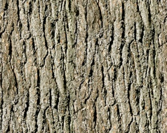 Natures Glory Tree Bark Fabric From Quilting Treasures By the Yard