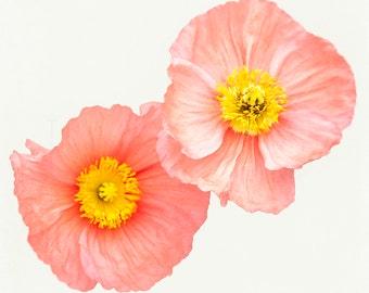 Poppy Photograph - Pink Yellow Flowers - Nursery Wall Art Print - nature photography - girls room - feminine home decor - minimalist art