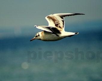 Flying Seagull-Photography Inkjet Photo card 10 x 15 cm