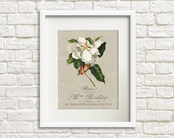 Linen Magnolia - Botanical Artwork, Floral Art Prints, Farmhouse Chic Style Decor, Flower Print, French Country Decor, Wall Art Decor