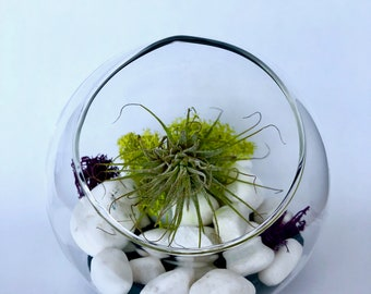 Medium Terrarium