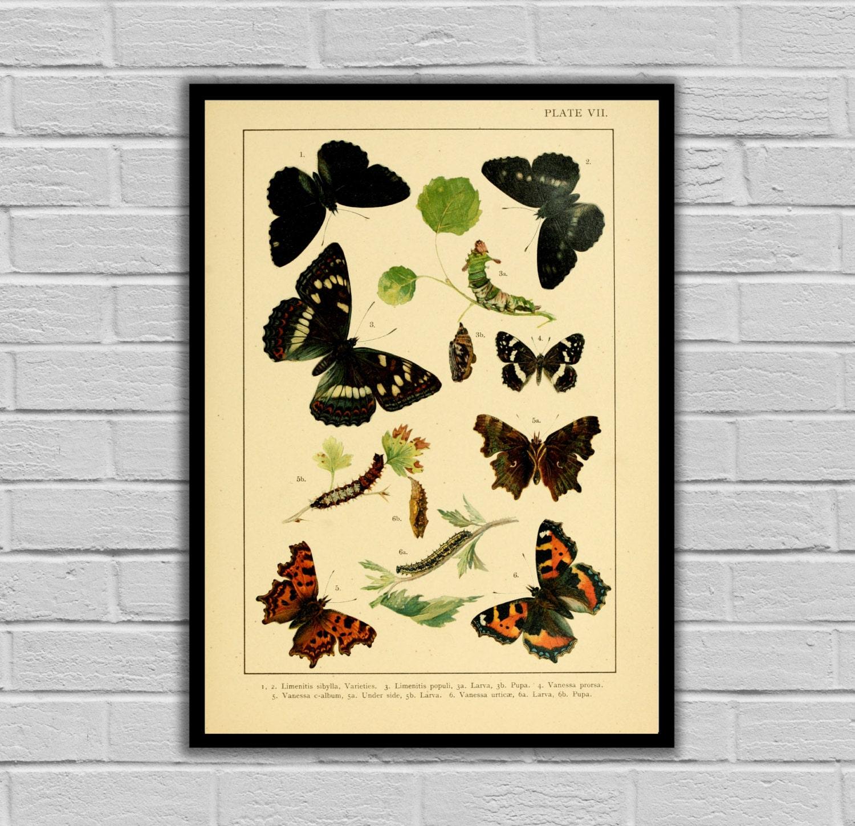 Vintage English Garden Decor - Butterflies - Moths and Butterflies ...