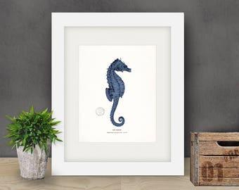 Coastal Decor Antique Sea Horse Natural History Art Print - indigo