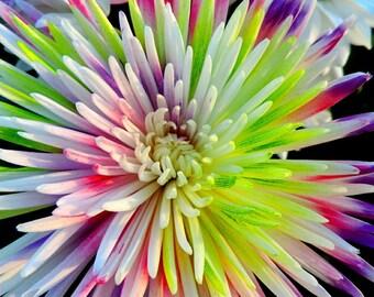 Starburst Flower Photograph