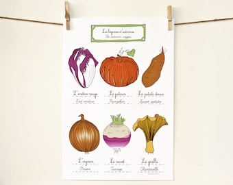 Kitchen Food Poster in French 'Fall Vegetables'  art for kitchen 13x19 Fall pumpkin red endive pumpkin sweet potato onion turnip chanterelle