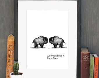 A4 Double American Bison Watercolour Art Print
